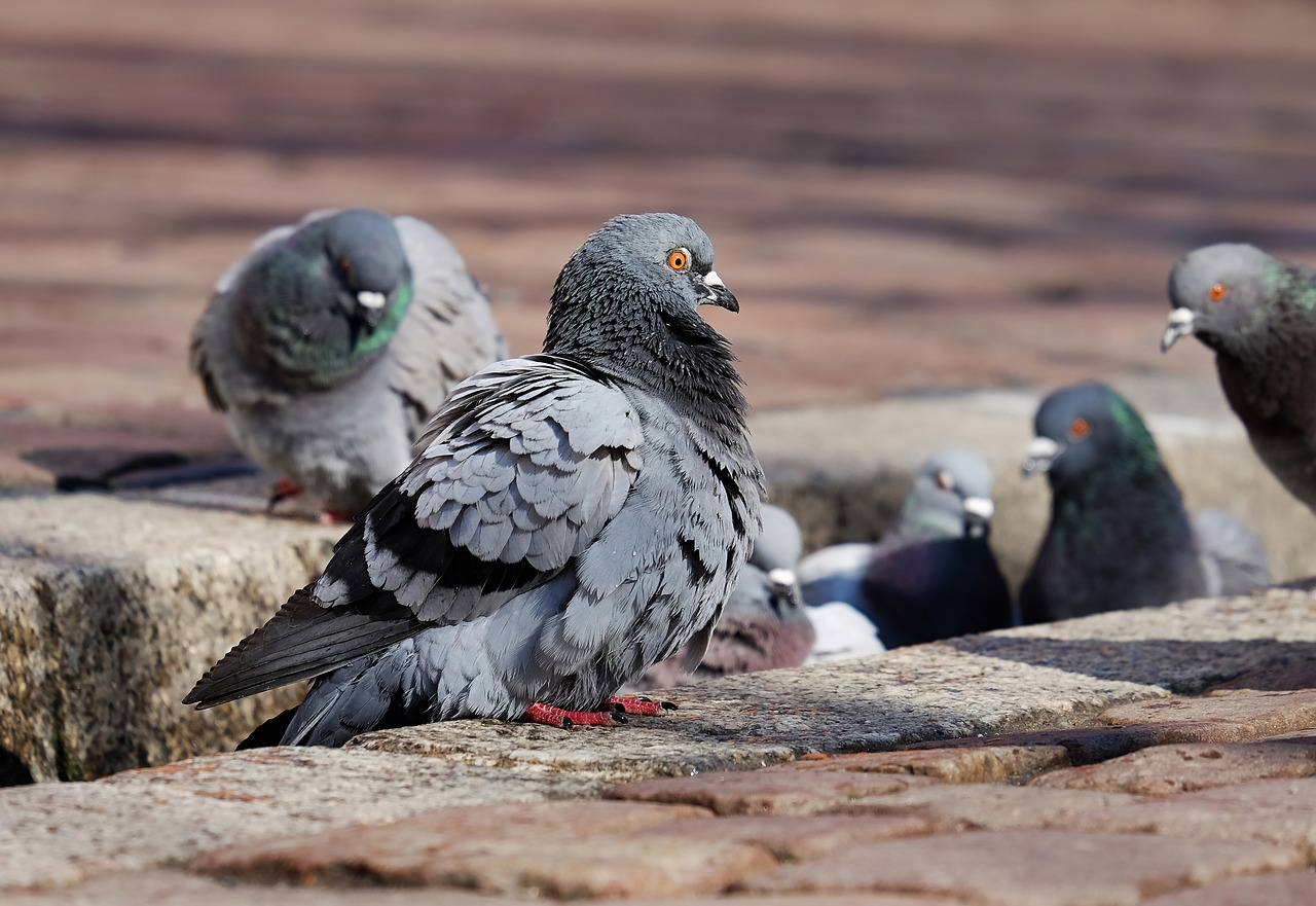 An image of pigeons on a rooftop