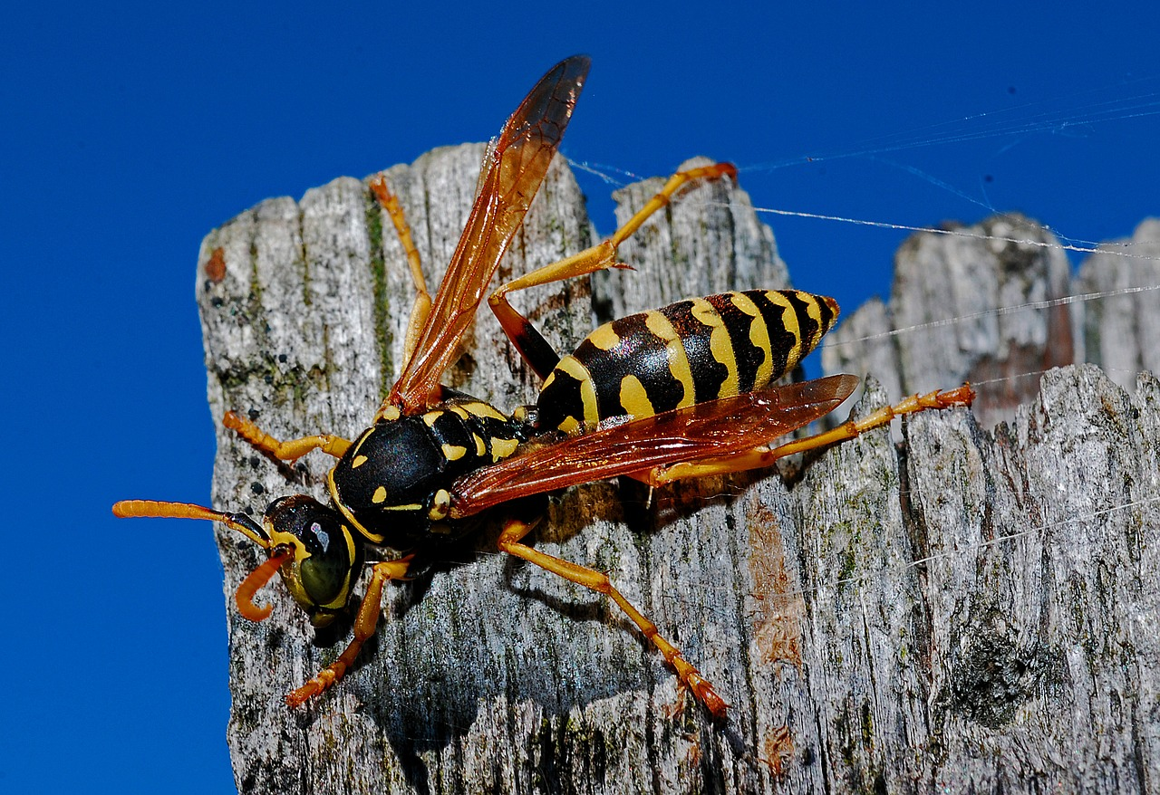 Image of a wasp on a piece of wood